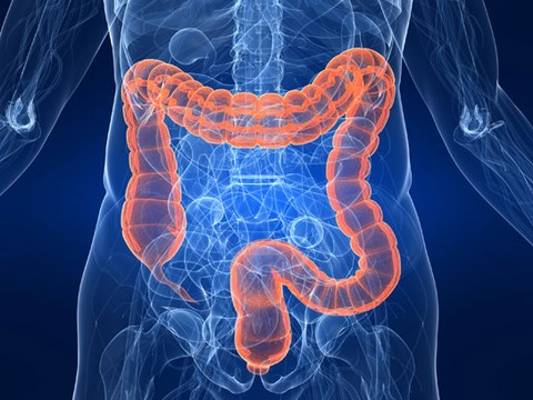 tumore intestino,tumore intestino sintomi,sintomi tumore intestino,sigma intestino,cancro intestino,adenocarcinoma intestino,carcinoma intestino,cancro all intestino,intestino sigma,tumore intestino sopravvivenza,tumore intestino tenue,intestino colon,cancro intestino sintomi,cancro all intestino sintomi,sintomi cancro intestino,carcinoma all intestino,sintomi cancro all intestino,sintomi del cancro all intestino,intestino tumore sintomi,ernia all intestino,intestino tumore,grosso intestino,carcinoma intestino sintomi,asportazione intestino